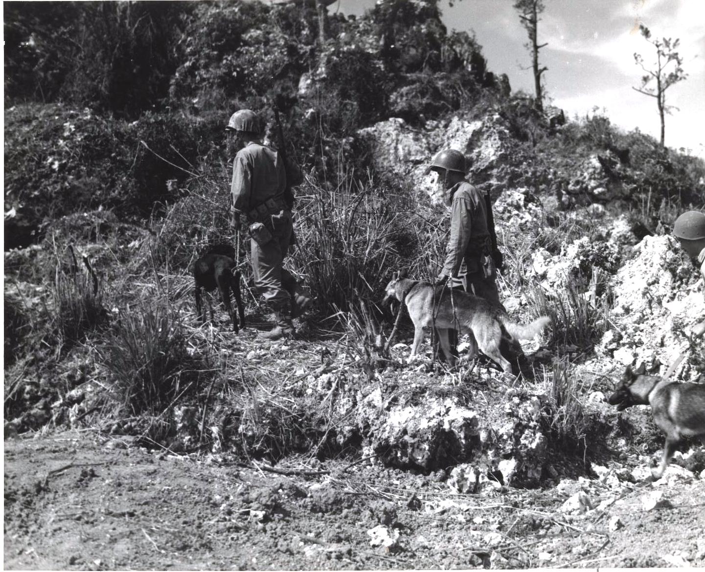 I War Dog americani pattugliano Okinawa